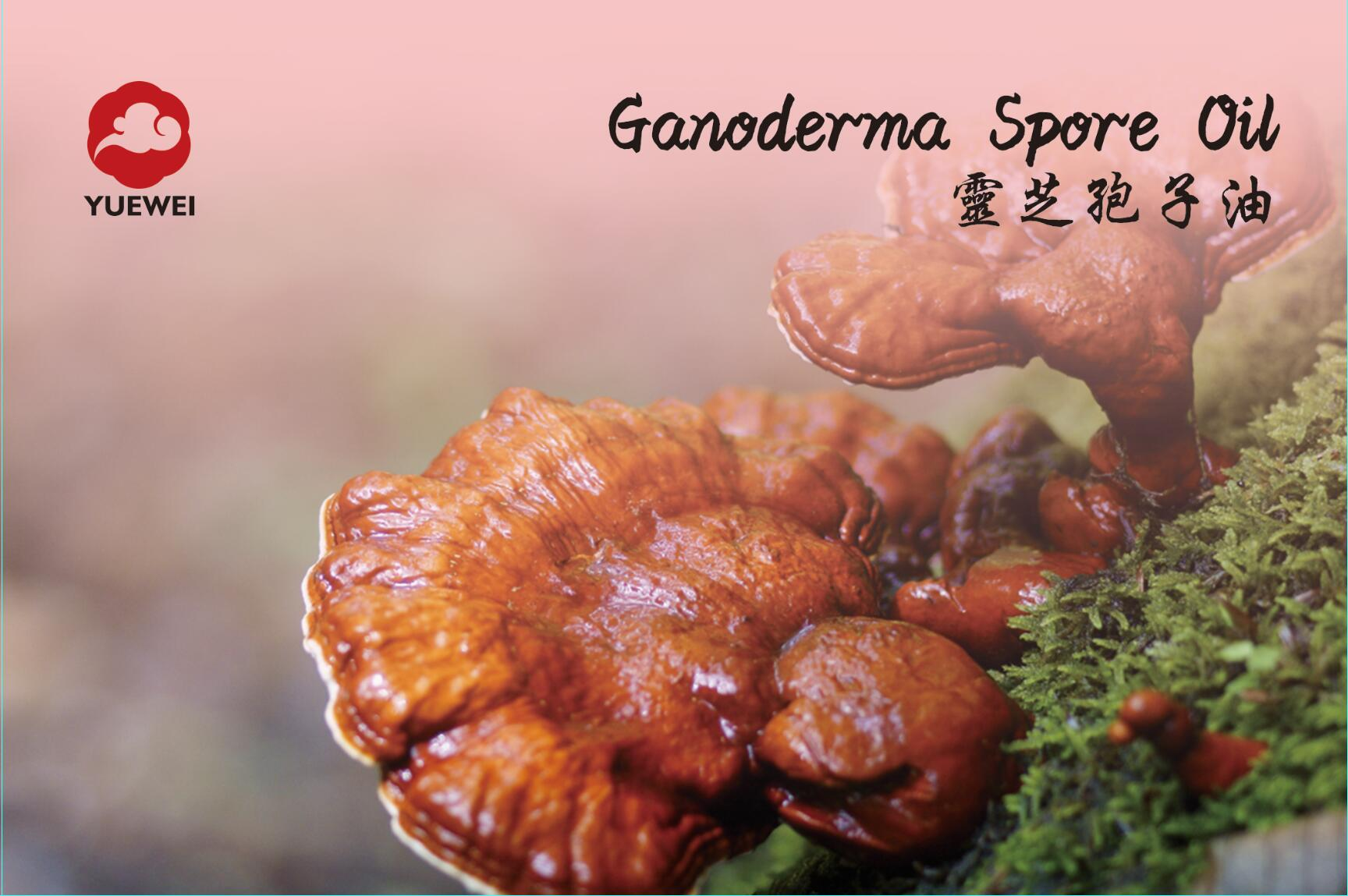 GANODERMA SPORE OIL