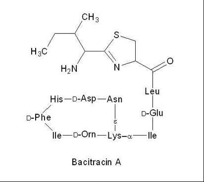 Bactrian