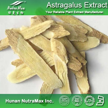 Nutramax Supplier - Astragalus Extract Polysaccharides 40%~70%