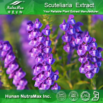 Nutramax Supplier -Scutellaria extract80~95% Baicalin