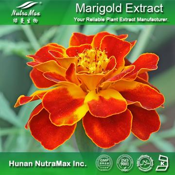 100%Nutramax Supplier - Marigold ExtractSpecification: 5%~70%