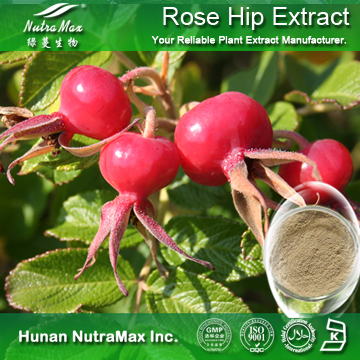 100%Nutramax Supplier - Rose Hip Extract10% 20% 30% polyphenols;