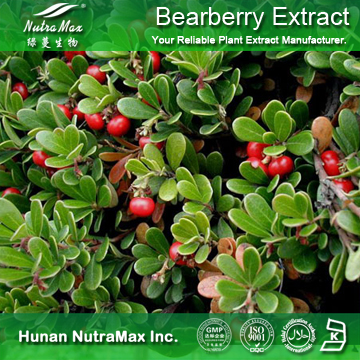 100%Nutramax Supplier -Bearberry Extract