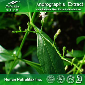 100%Nutramax Supplier -Andrographis Paniculata Extract5~90%
