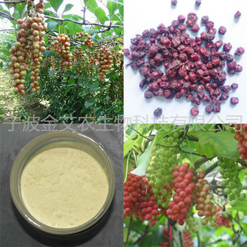 High Quality Schisandra Chinensis Extract 9% Schisandrins