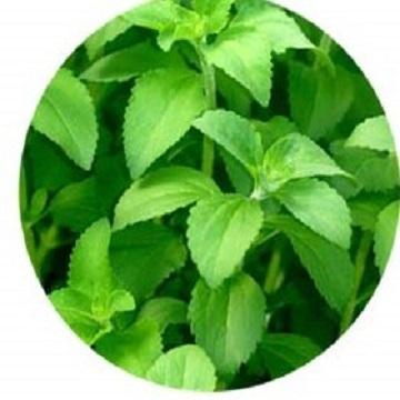 Stevia Leaf P.E.