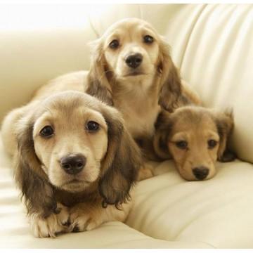 Pet Supplemental Premix